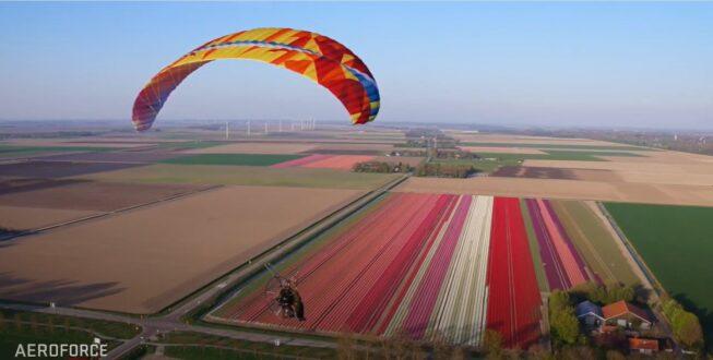 Kleurige tulpenvlucht